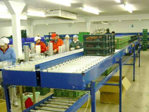 Strawberry Packing Line 2
